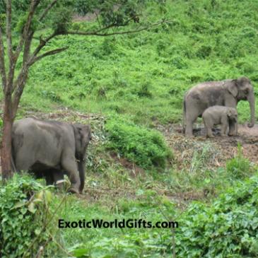 www.ExoticWorldGifts.com